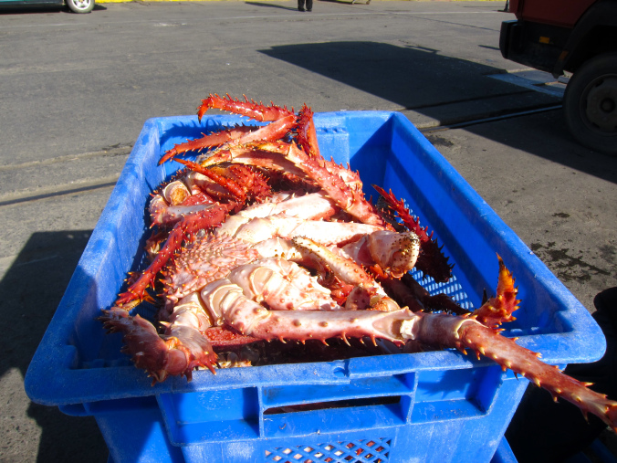 Where to buy live red king crab in Norway, Norwegian Seafood Supply
